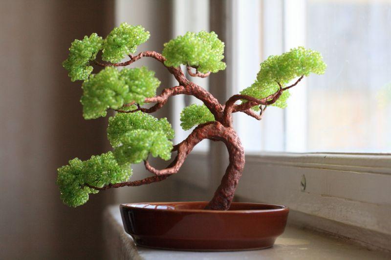 Бонсаи дерево своими руками фото
